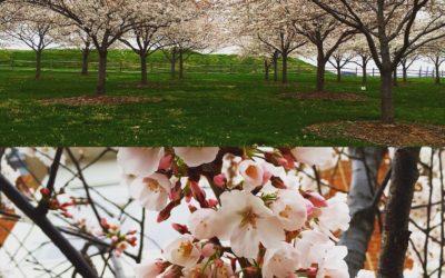 Saucha: Purification & Spring Detox